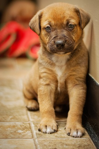 male pup