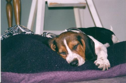 Sherlock_puppy3b