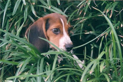 Sherlock_puppy7b