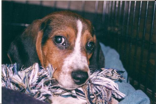 Sherlock_puppyb