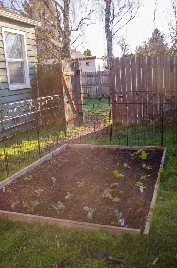 gardening-16