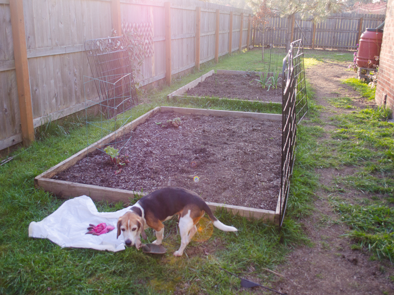 Dog proofing the garden the simple lens