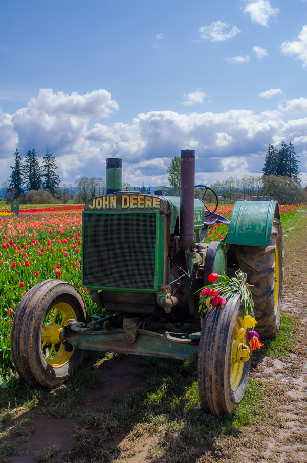Tractor at Wooden Shoe Tulip Farm