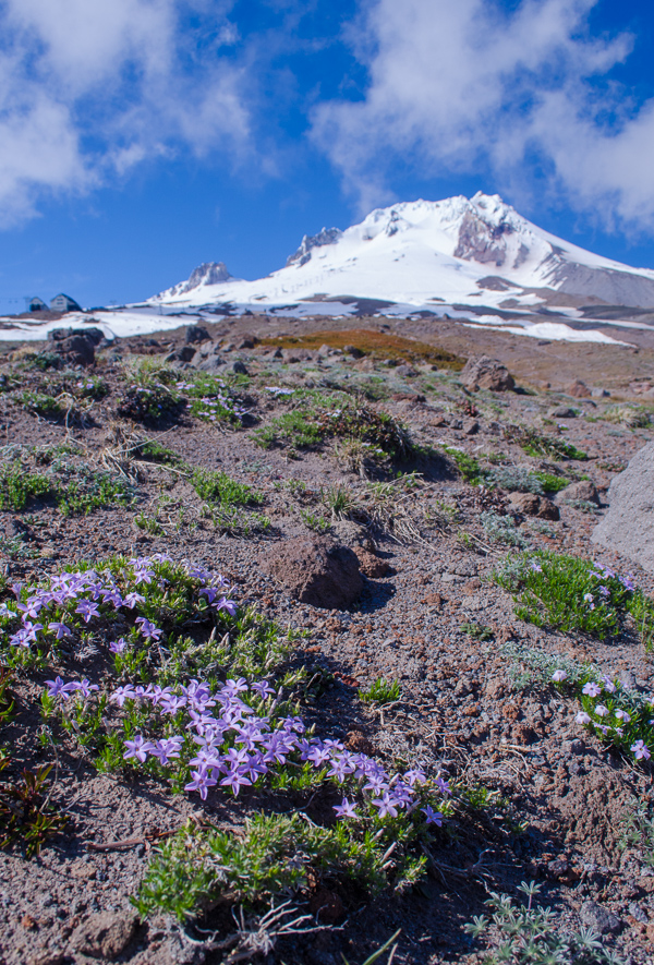 mounthood-22