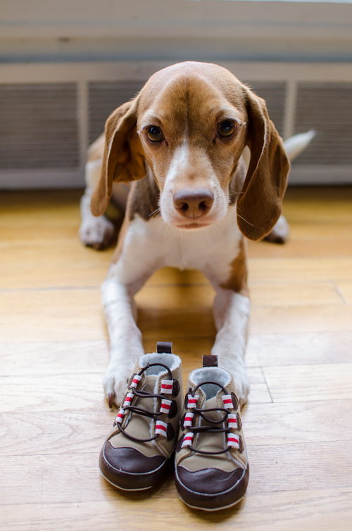 dogswithbabyshoes-1