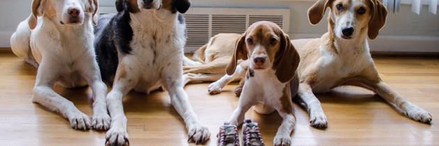 Dogs vs. baby