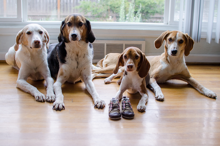 dogswithbabyshoes-17