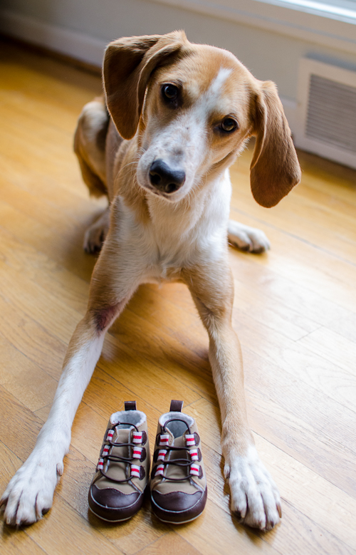 dogswithbabyshoes-6