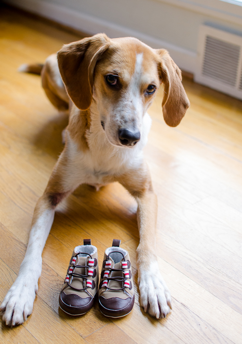 dogswithbabyshoes-7